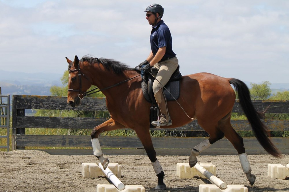 Traumatic Horse Training: Can You Spot Abuse? – The Horse |Horse Training